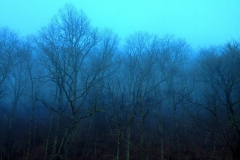 Blue Ridge Parkway, Thunder Struck Ridge Christmas Day by Teri Leigh Teed