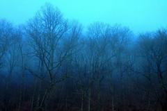 Blue Ridge Parkway, Thunder Struck Ridge Christmas Day by Teri Leigh Teed