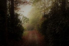 Foggy Autumn Morning Nantahala Forest by Teri Leigh Teed