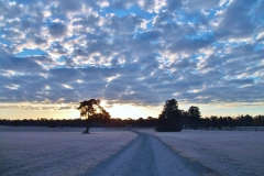 Early November Morning by Teri Leigh Teed
