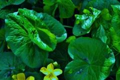 English Water Lilies by Teri Leigh Teed