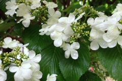 Green and White Blossoms by Teri Leigh Teed