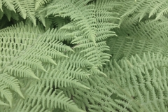 Summer Ferns by Teri Leigh Teed