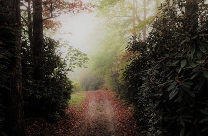 Foggy Autumn Morning by Teri Leigh Teed