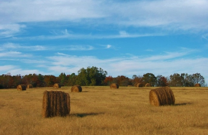 Haybales in Fields, Fairfield County SC by Teri Leigh Teed 2005