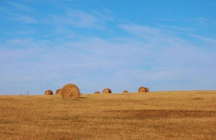 November Haybales, Fairfield County SC by Teri Leigh Teed