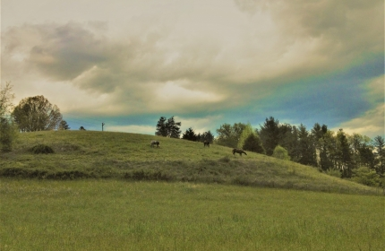 Summer Mountain Pasture by Teri Leigh Teed