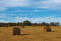 Haybales in Fields, Fairfield County SC by Teri Leigh Teed
