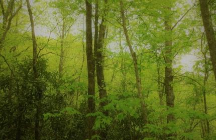 Along the Ridge by Teri Leigh Teed