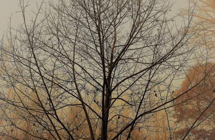 November-Tree-by-Teri-Leigh-Teed