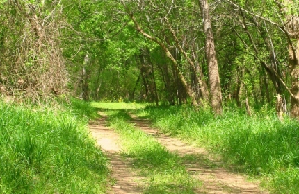 The Road Less Travelled, Blair SC by Teri Leigh Teed