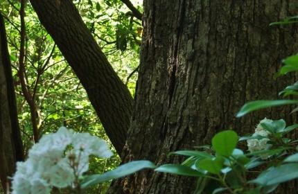 The Sheltering Tree, Kalmia Garden by Teri Leigh Teed