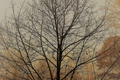 November Tree by Teri Leigh Teed