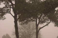 Foggy Winter Day by Teri Leigh Teed 2012