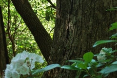 The Sheltering Tree, Kalmia Garden by Teri Leigh Teed
