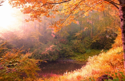 Morning Light, Spring Pond at Autumn Equinox by Teri Leigh Teed