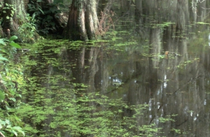 September at the Swamp by Teri Leigh Teed