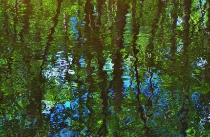 Reflections on Black Creek, Kalmia Garden by Teri Leigh Teed