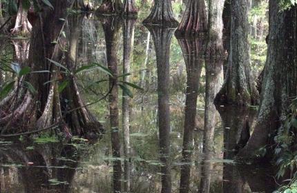 Water-Swamp-Reflections-Swan-Lake-by-Teri-Leigh-Teed-copy