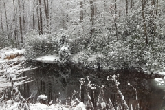 Spring Pond in Winter Snow by Teri Leigh Teed