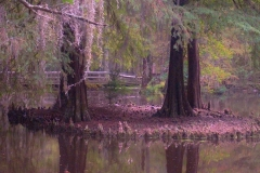 Autumn's Reflection, Swan Lake, Sumter SC by Teri Leigh Teed