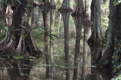 Swamp Reflections Swan Lake by Teri Leigh Teed