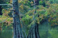 Twin Trees, Swan Lake, Sumter SC by Teri Leigh Teed