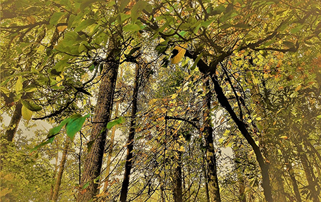 Early-Fall-Nantahala-Forest-by-Teri-Leigh-Teed