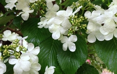 Flowers-Green-and-White-Blossoms-by-Teri-Leigh-Teed-copy