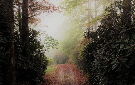 Foggy-Autumn-Morning-by-Teri-Leigh-Teed