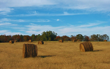 Landscapes-Haybales-in-Fields-Fairfield-County-SC-by-Teri-Leigh-Teed-copy-2